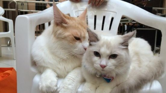 愛莎名貓主題咖啡館