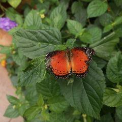 蝴蝶館用戶圖片