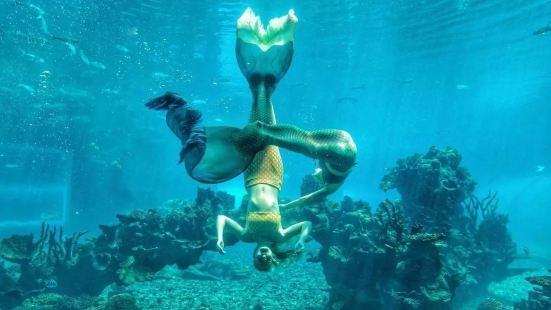 天房洲際度假酒店-海底餐廳 濤餐廳