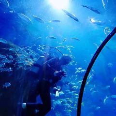 邯鄲海洋公園用戶圖片