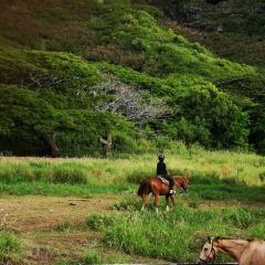 古蘭尼牧場用戶圖片