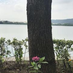 北投溫泉泡湯用戶圖片