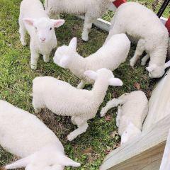 愛歌頓農場用戶圖片