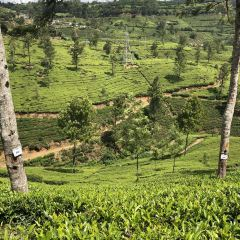 Pedro Tea Factory User Photo