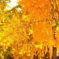 Huani Park User Photo