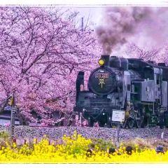 真岡観光リス村用戶圖片