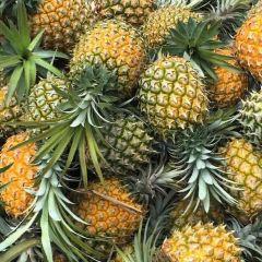 The Big Pineapple User Photo