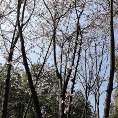 Xinghai Park User Photo