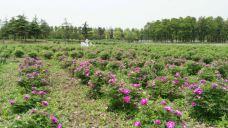 长江药用植物园-如皋-峰行天下第一