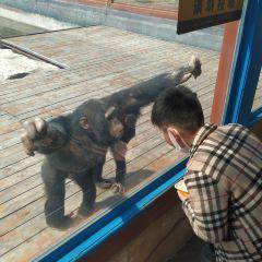 Yonghong Yesheng Dongwu World User Photo