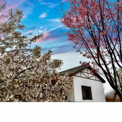 Yueyang Cherry Blossom Garden User Photo