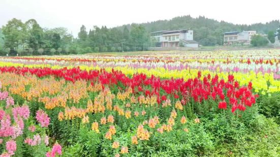 대만 사계절 꽃밭