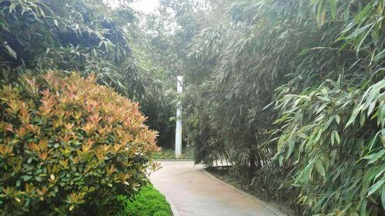 竹之林公園