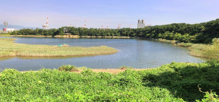 오사카 난코 야생조류공원