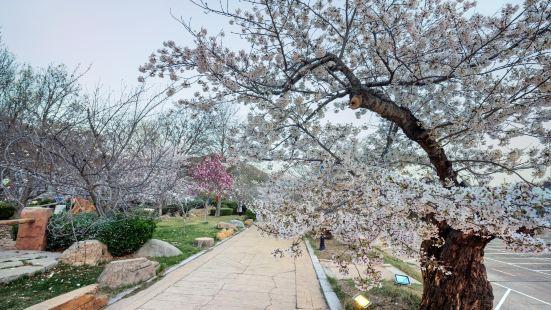 용왕탕 벚꽃공원