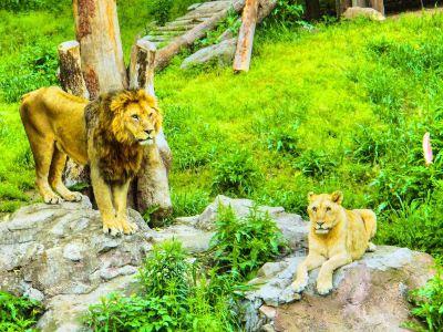 Youngor Zoo