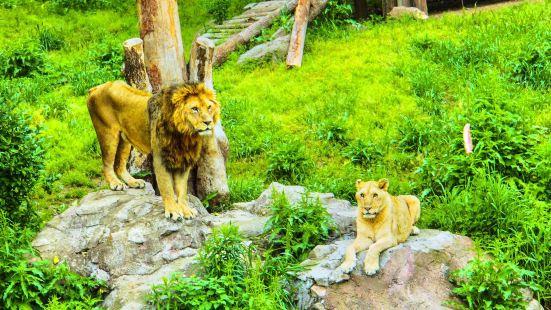 윤고르 동물원