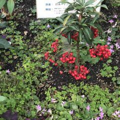 Hakodate Tropical Botanical Garden User Photo