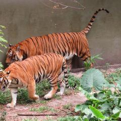 新山動物園用戶圖片