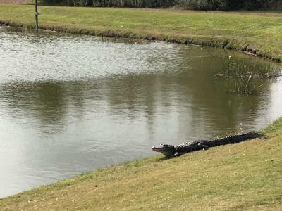 The Ritz-Carlton Golf Club, Orlando, Grande Lakes