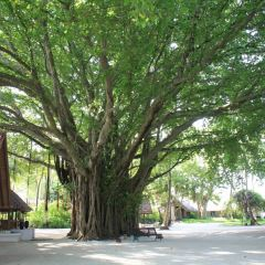 Banyan Tree Temple User Photo
