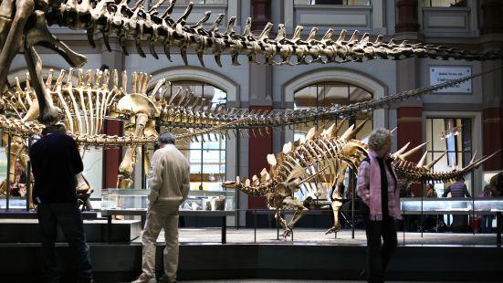 Silliman University Whale Bone Museum