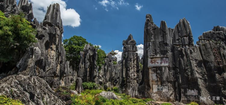 Stone Forest3