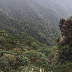 箬寮原始林用戶圖片