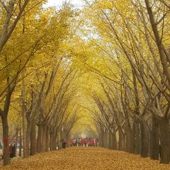 Ginkgo Time Tunnel User Photo