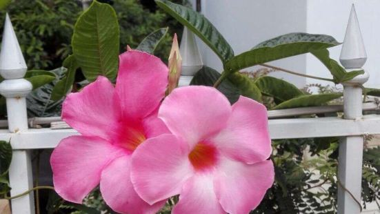 通州區花卉產業服務中心