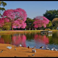 Ibirapuera Park User Photo