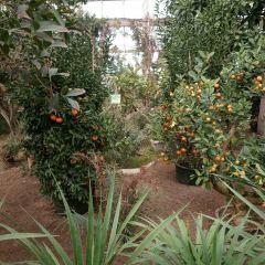 스자좡 식물원 여행 사진