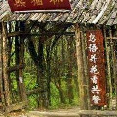 판다숲 여행 사진