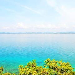 棉花島用戶圖片