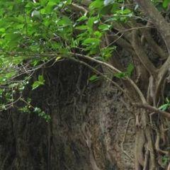 白榕園用戶圖片