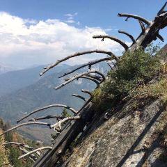 킹스 캐년 국립공원 여행 사진