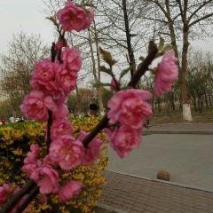 Northeastern University at Qinhuangdao (East Gate 1) User Photo
