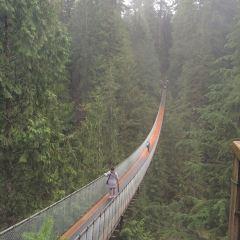 Capilano Suspension Bridge Park User Photo