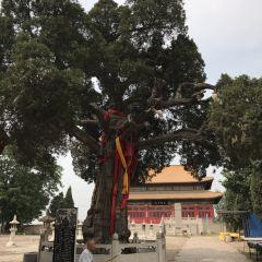 晾馬台明月禪寺用戶圖片