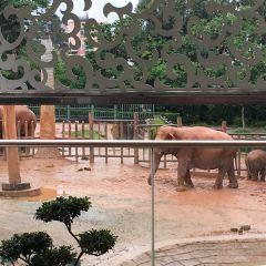 쿤밍 동물원 여행 사진