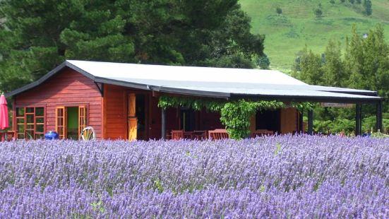 Lauren's Lavender Farm