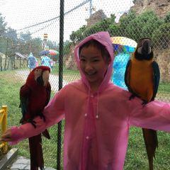 신조산 야생동물원 여행 사진