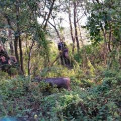 Ayothaya Elephant Village User Photo