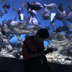 蘭州極地海洋世界用戶圖片
