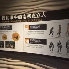 江蘇江寧湯山方山國家地質公園博物館用戶圖片