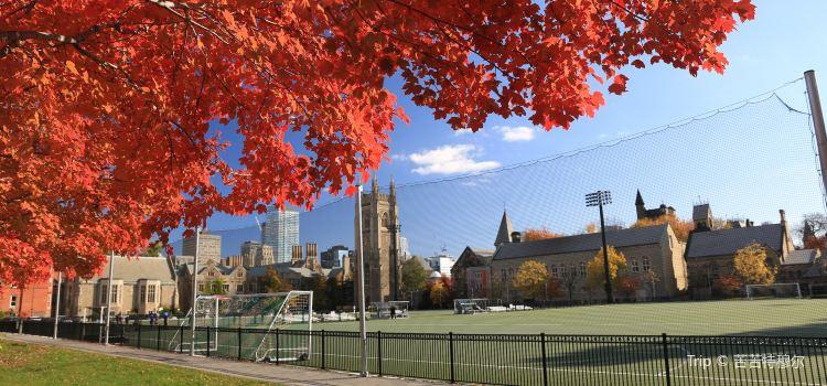 University of Toronto1