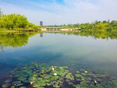 金宝乐园、白浪绿洲湿地公园亲子1日游
