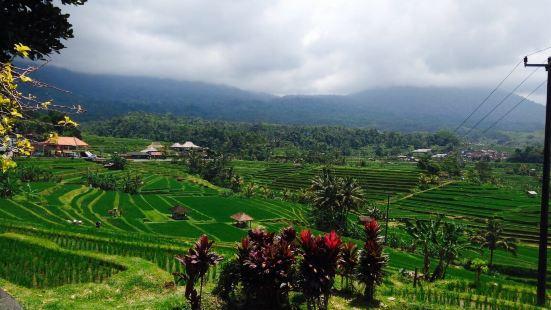 Udiana Bali Tours