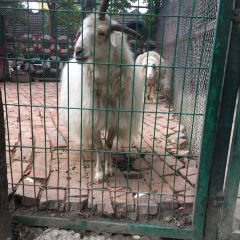 Nanhu Dream Land User Photo