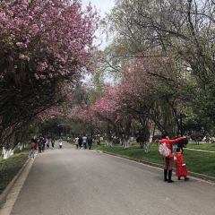 윈난대학교 여행 사진